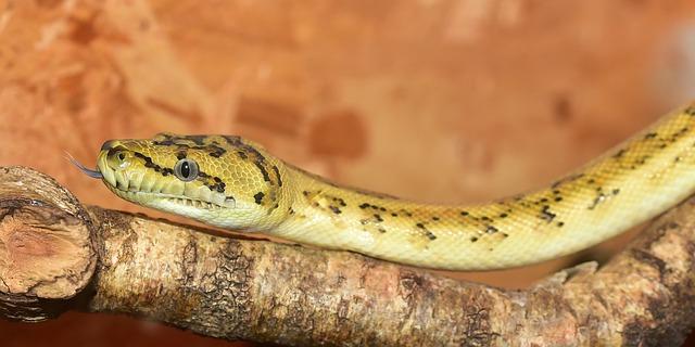 had na větvi